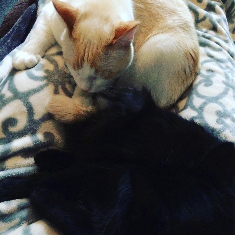 fb cats